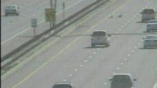 Family Of Geese Bring 401 Traffic To Grinding Halt