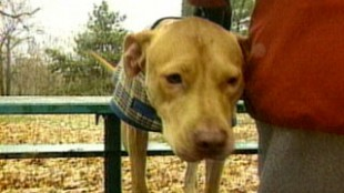 Part Of Ontario's Pit Bull Law Struck Down