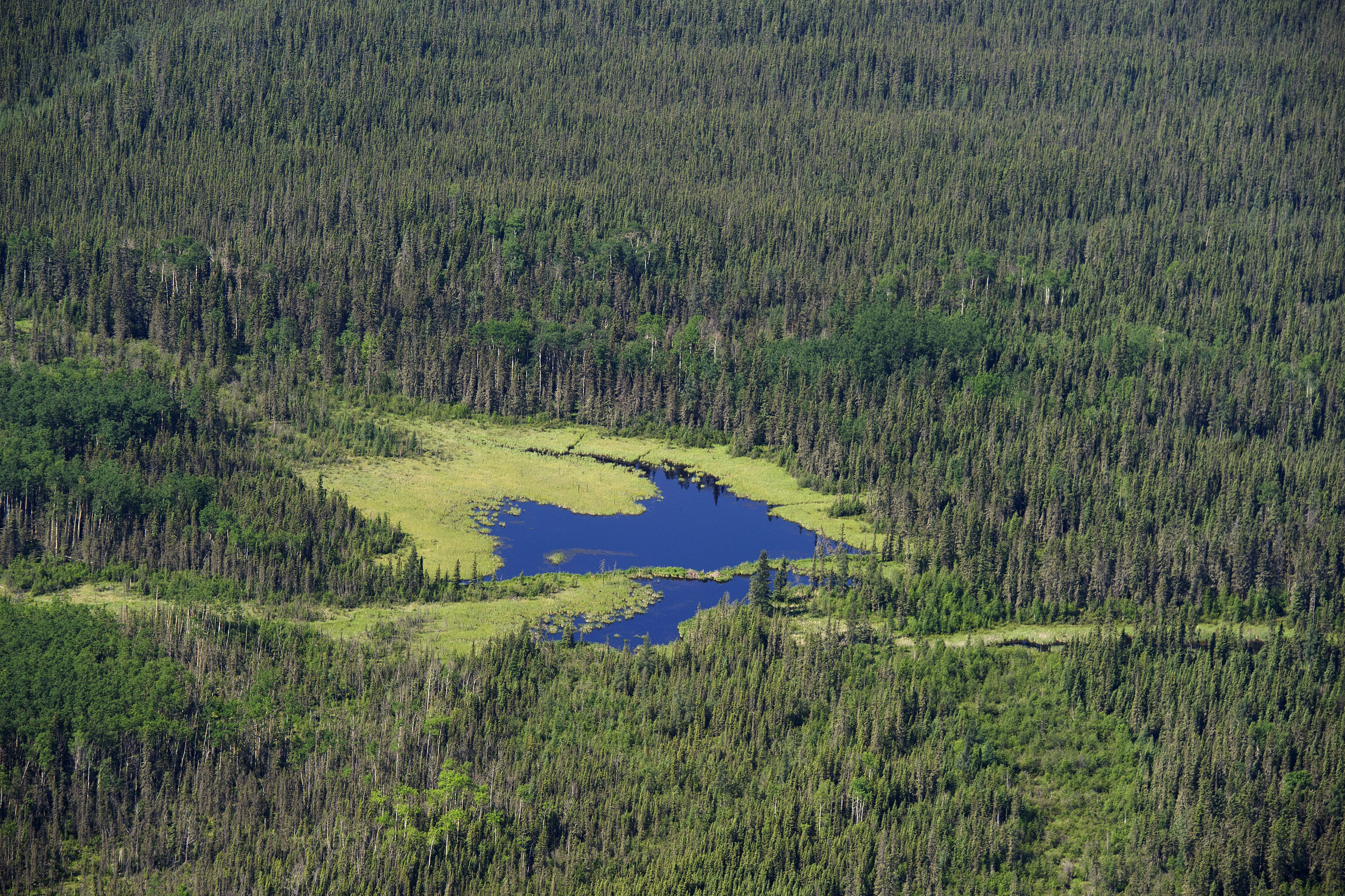 canada needs to up boreal forest conservation game paper citynews