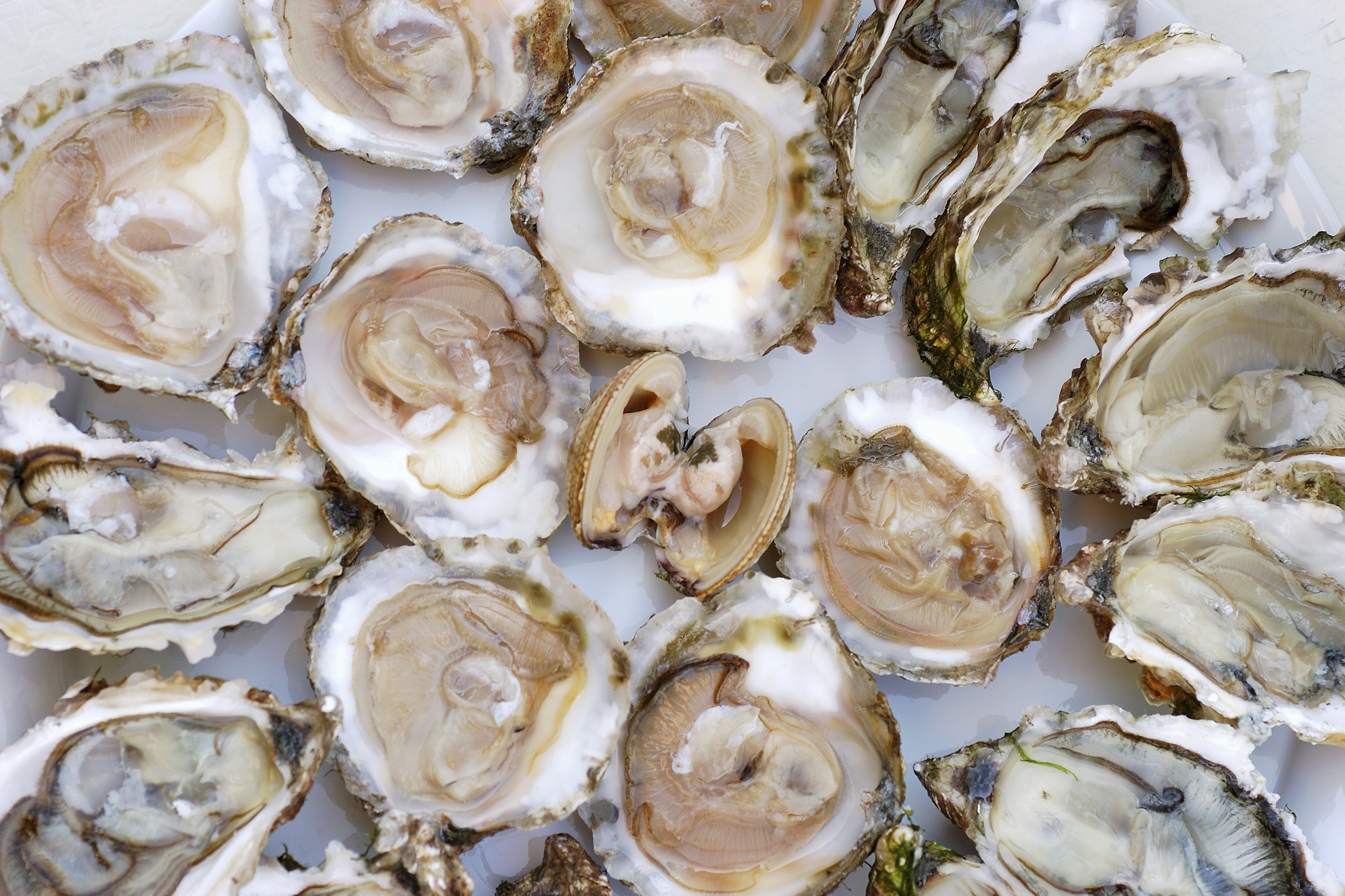 File photo of oysters and clams. STOCK FOOD CREATIVE/Alain Caste.