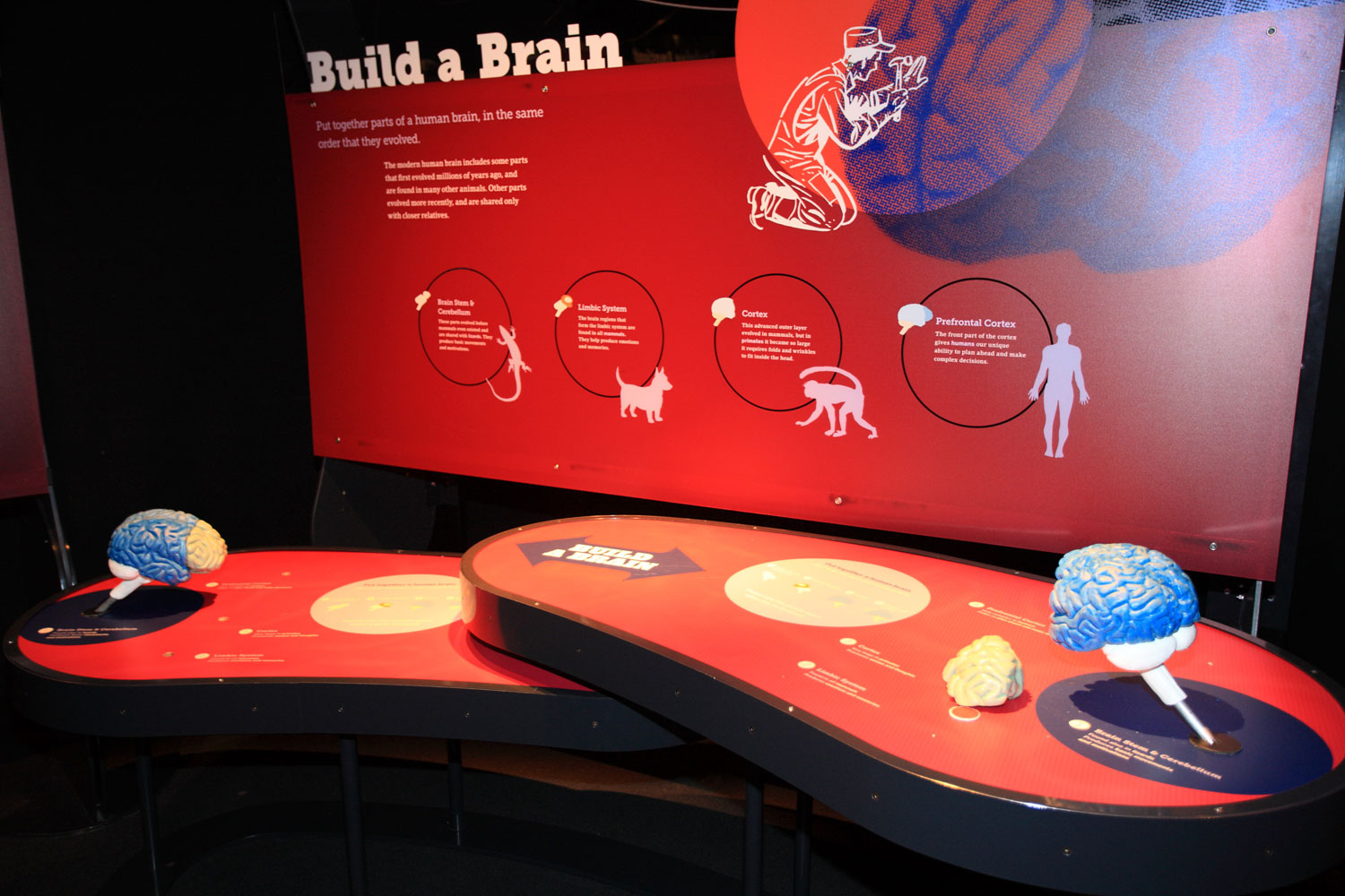 "One of the exhibits at the ""Brain: The Inside Story."" COURTESY: Ontario Science Centre"