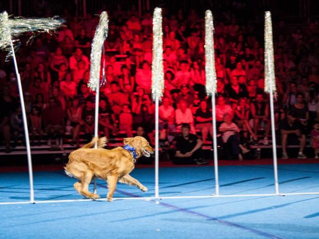 Dog Show Cne
