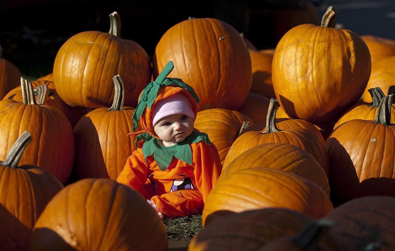 огорожены, прикольные фото на хэллоуин одно