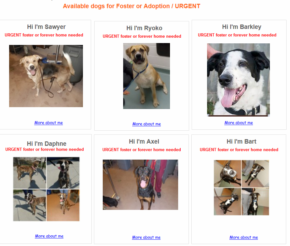 A small selection of the dogs available on the Rescue Dogs Match website. Screen grab via RescueDogsMatch.com.