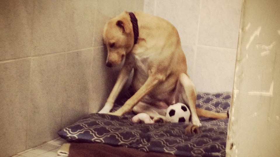 Lana the dog was returned to a shelter and her story has gone viral. Image via The Dodo/Lisa Burchell.