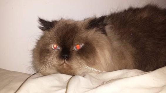 Trending: Grumpy Richmond Hill cat needs forever home