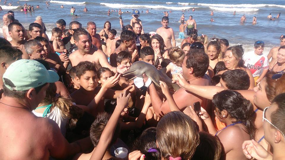 Photo of the dolphin being passed around on the beach. FACEBOOK/Hernan Coria