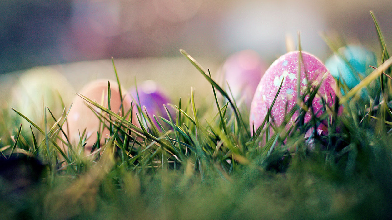 Colourful easter eggs sit in green grass. GETTY IMAGES/Lacaosa