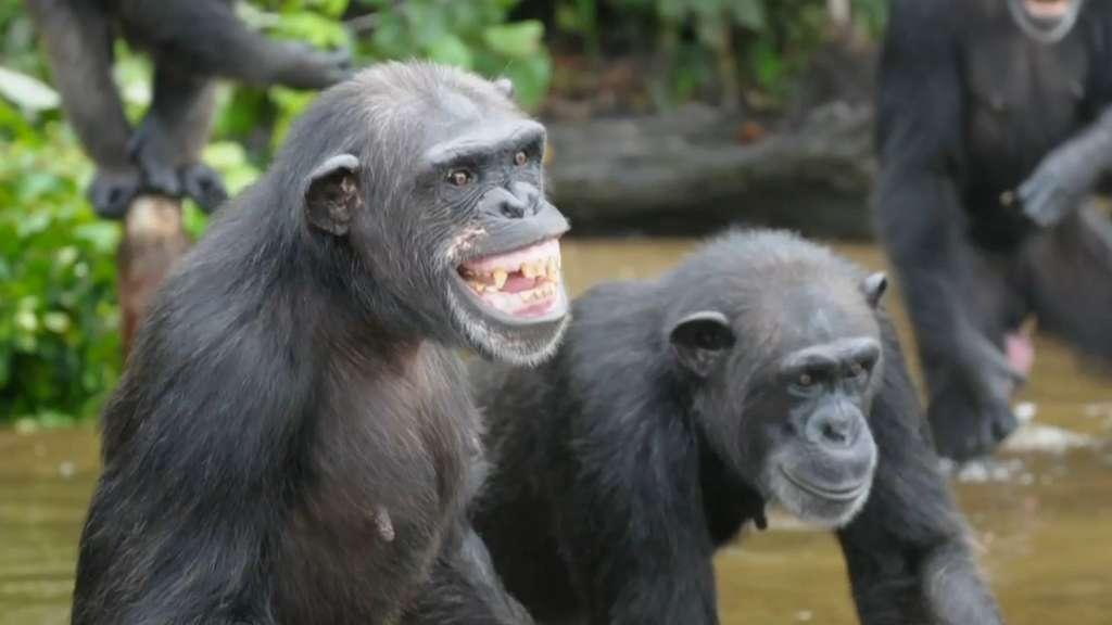 Image result for monkey island liberia