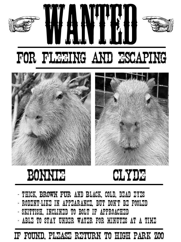capybara wanted poster
