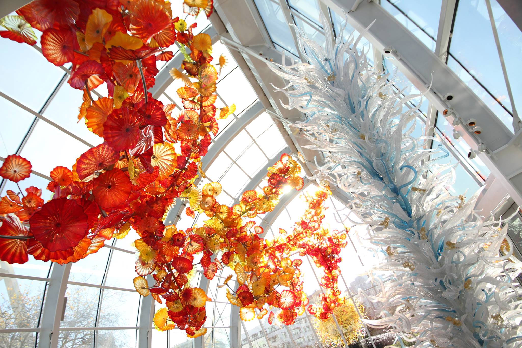 A blown glass sculpture at the Chihuly Garden and Glass in Seattle, Wash. Photo via Facebook.com/chihulygg