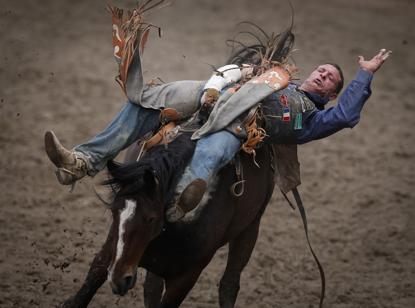 No Deaths Serious Injuries To Animals At Calgary Stampede