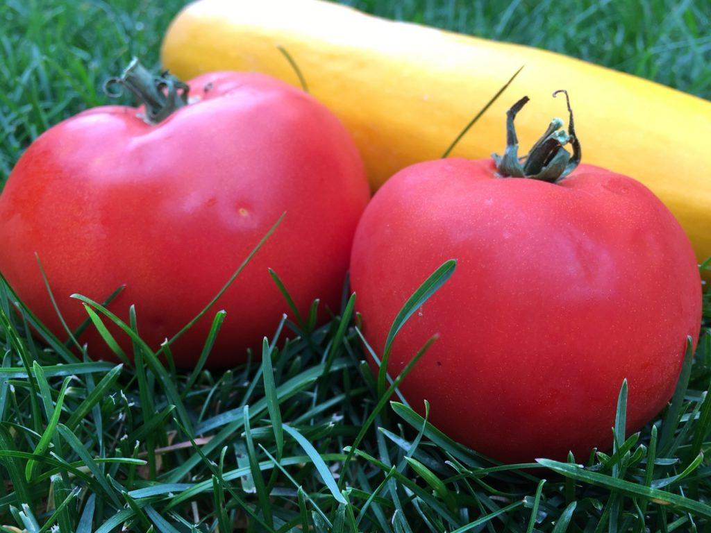 iPhone Compare Pic tomato 1
