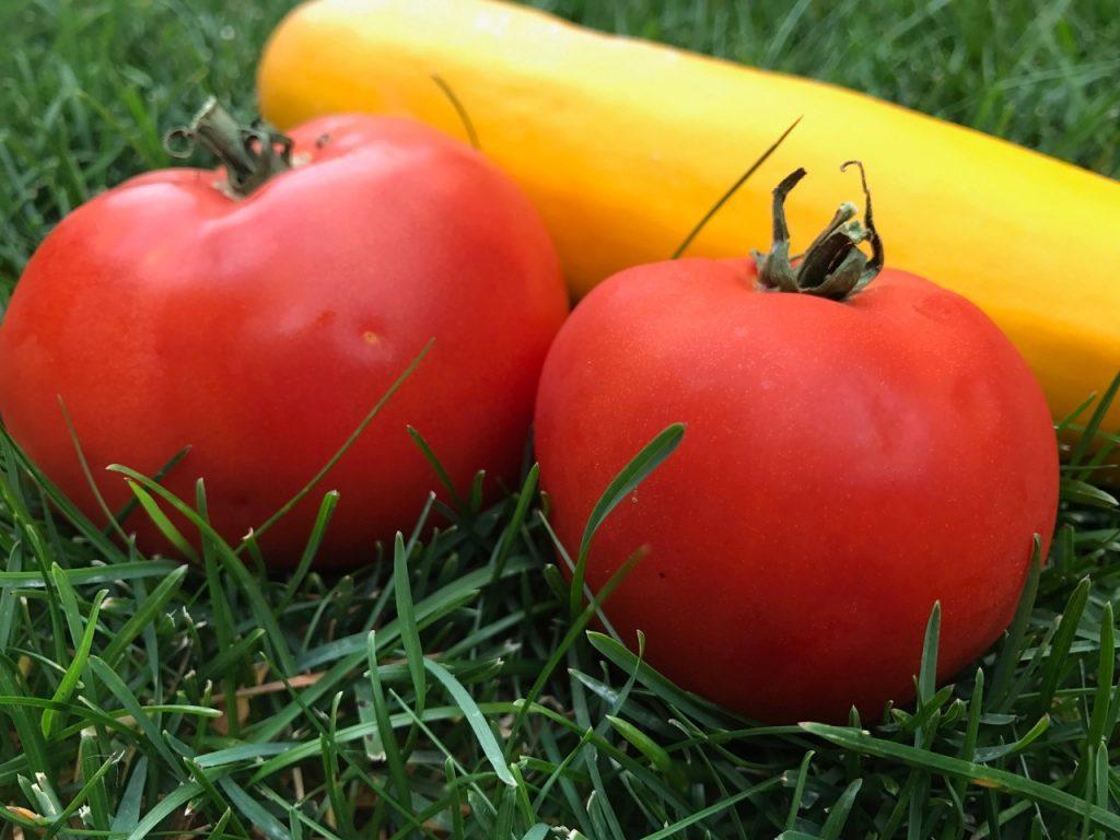 iPhone Compare Pic tomato 2