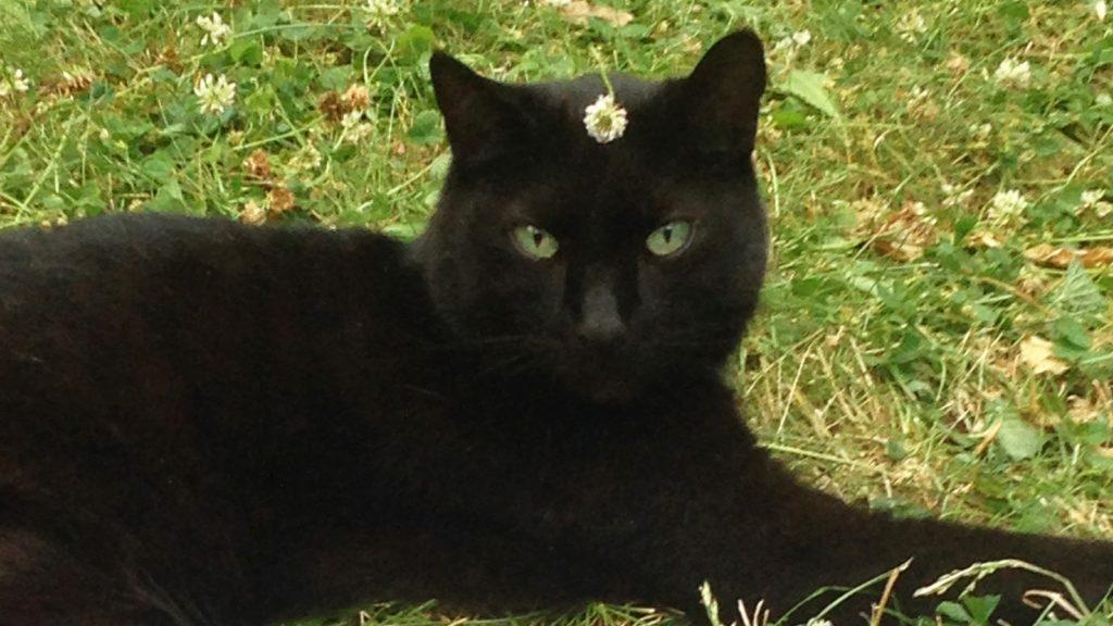 blackie3