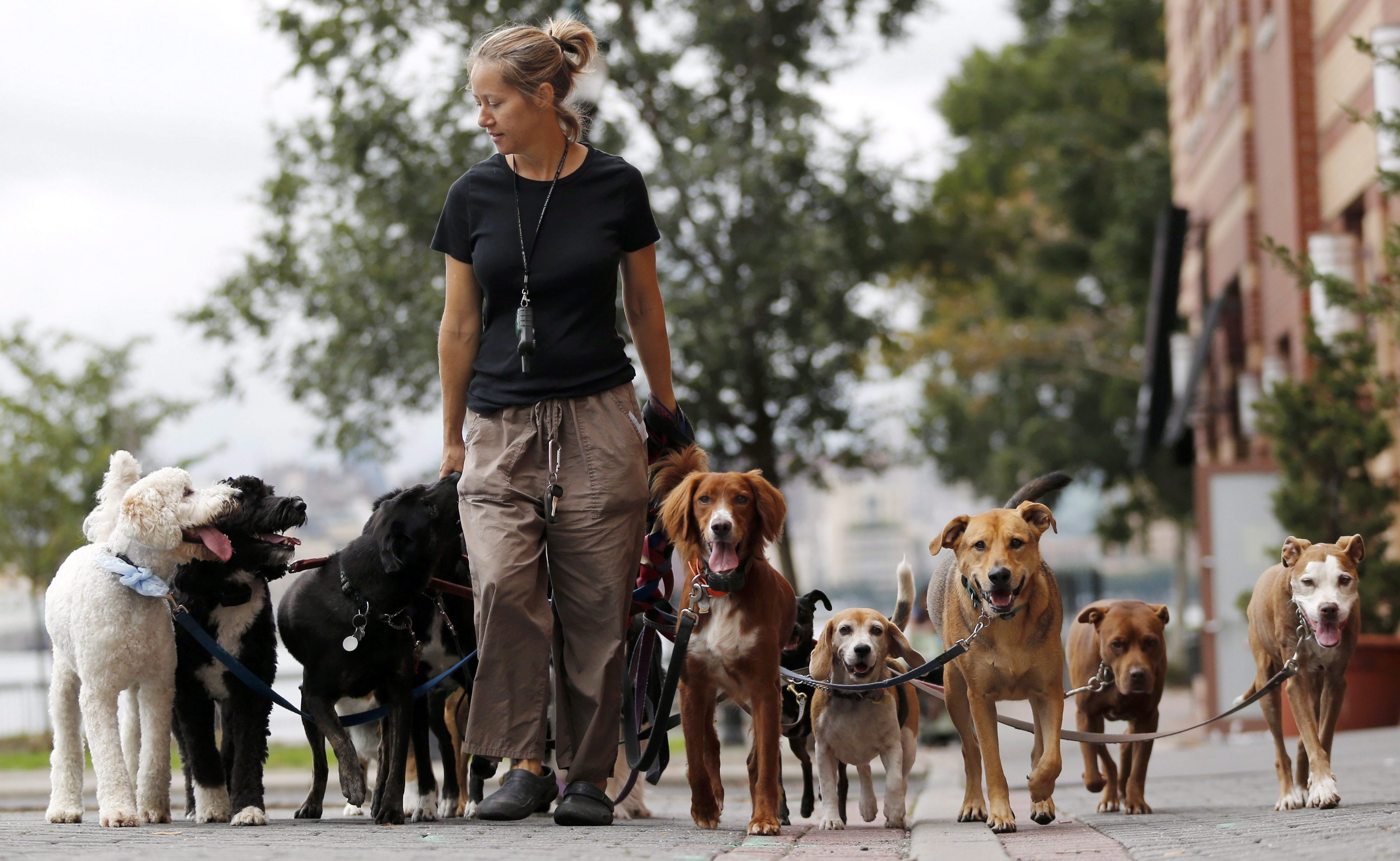 Toronto Dog Walker Job