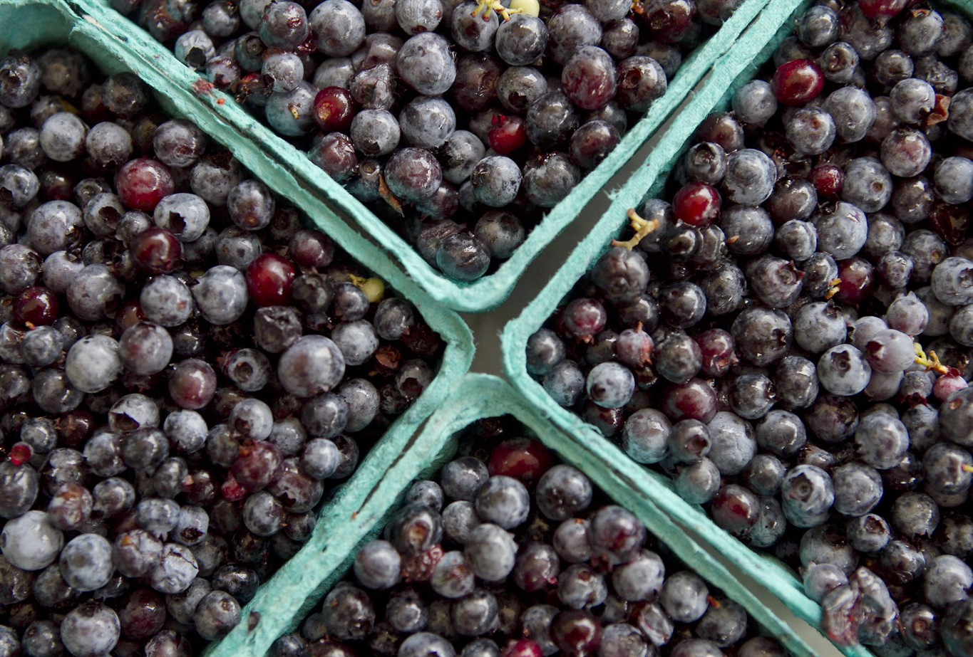 Cartons of wild blueberries are for sale at a roadside stand in Woolwich, Maine, on July 27, 2012. THE CANADIAN PRESS/AP/ Robert F. Bukaty