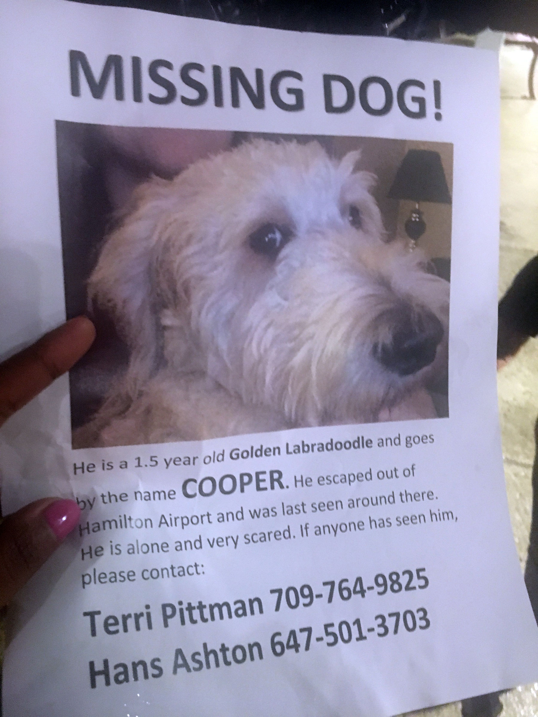 A poster shows Cooper, a Golden Labradoodle that went missing in Hamilton after being put on the wrong flight from Halifax on April 19, 2017. CITYNEWS