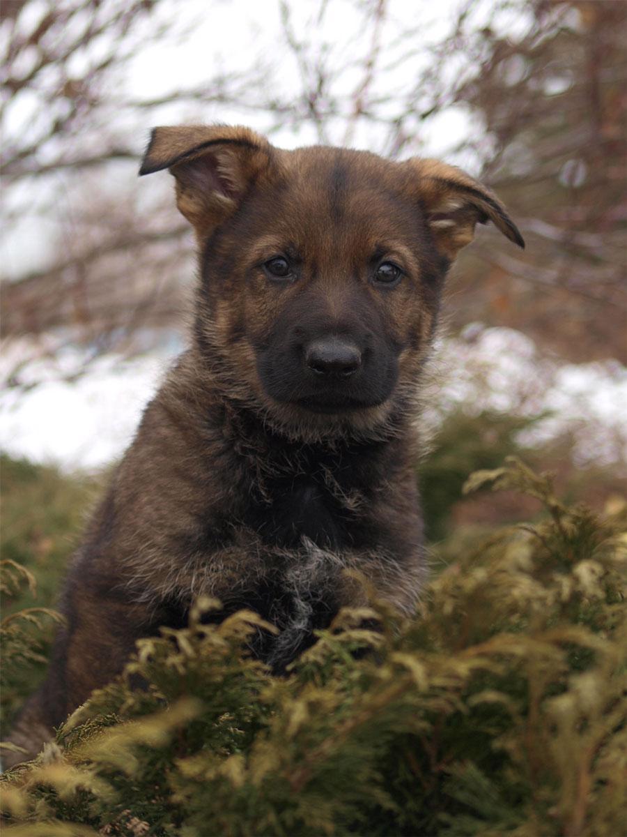 Puppy Police Dog Inside Car