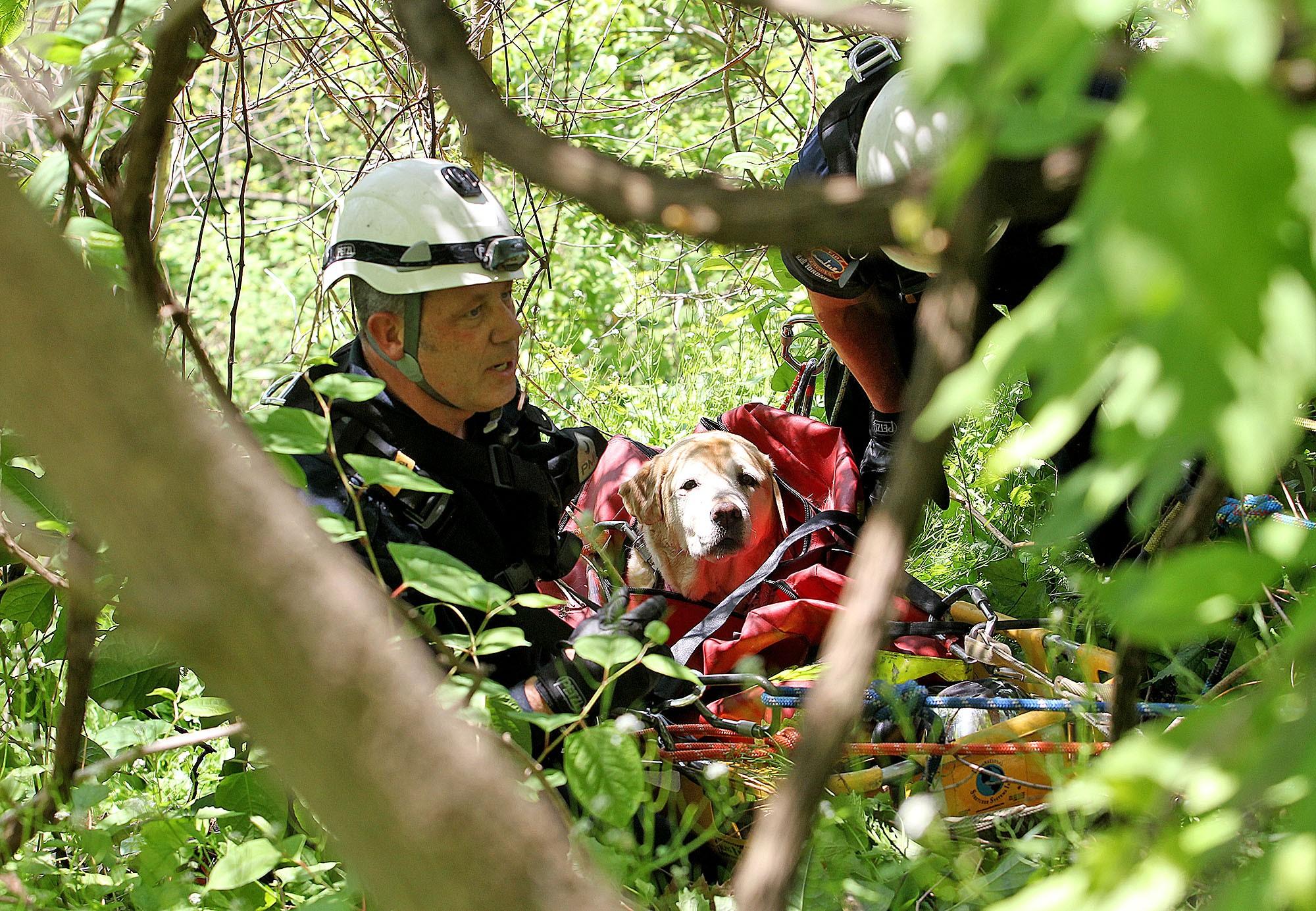 Scarborough Dog Rescue