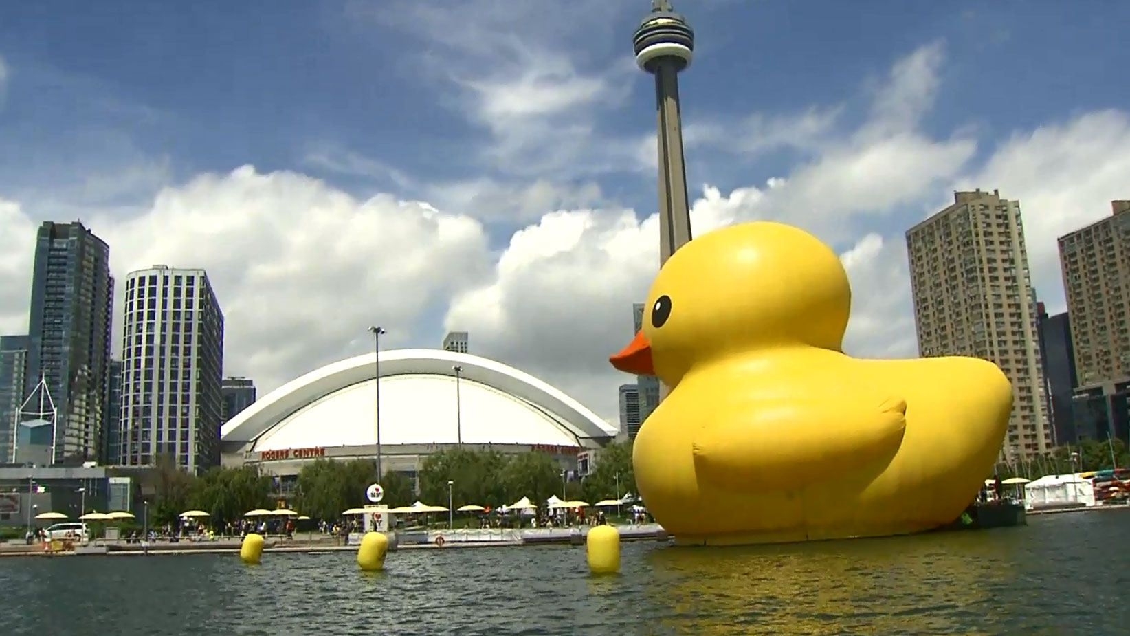 giant rubber duck wades into toronto after causing a flap