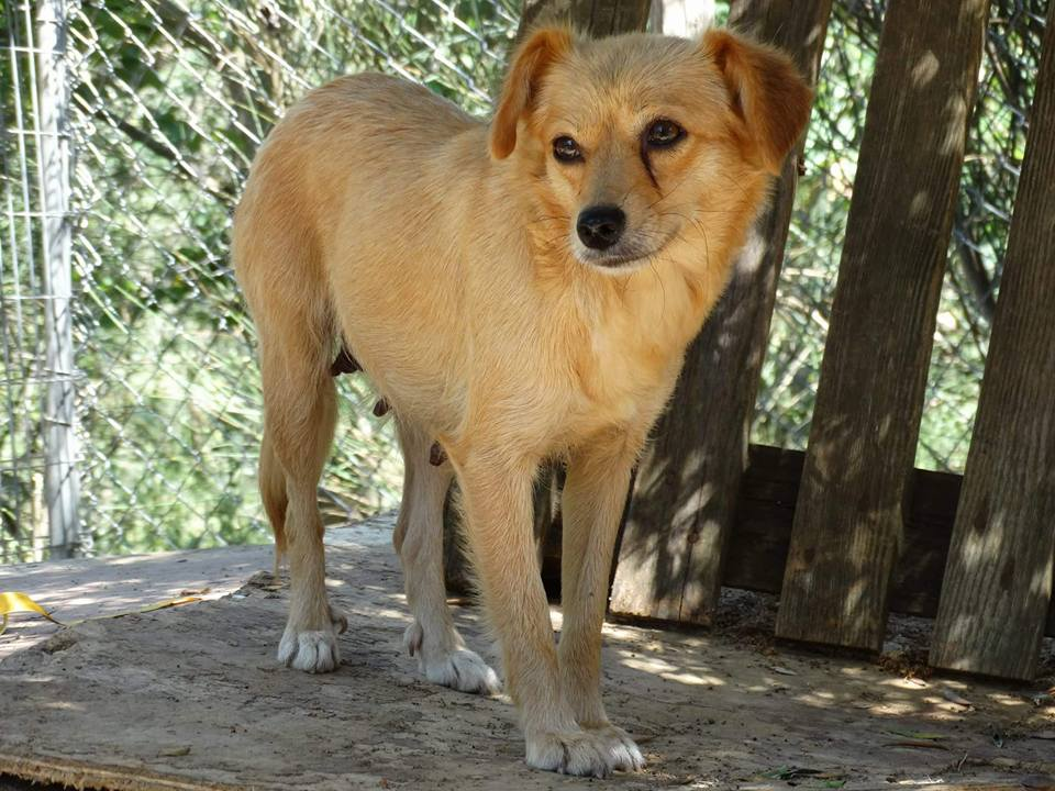 Emily, a rescue dog, went missing at Pearson airport on July 10, 2017. Image credit: Stray Paws from Greece, Toronto Dog Rescue