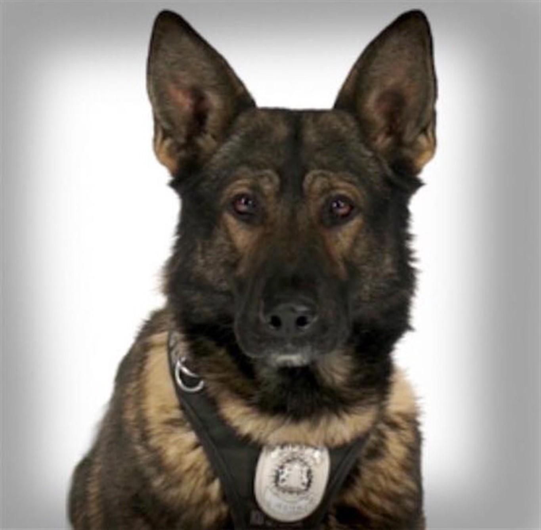 Calgary Police Service Dog Jester