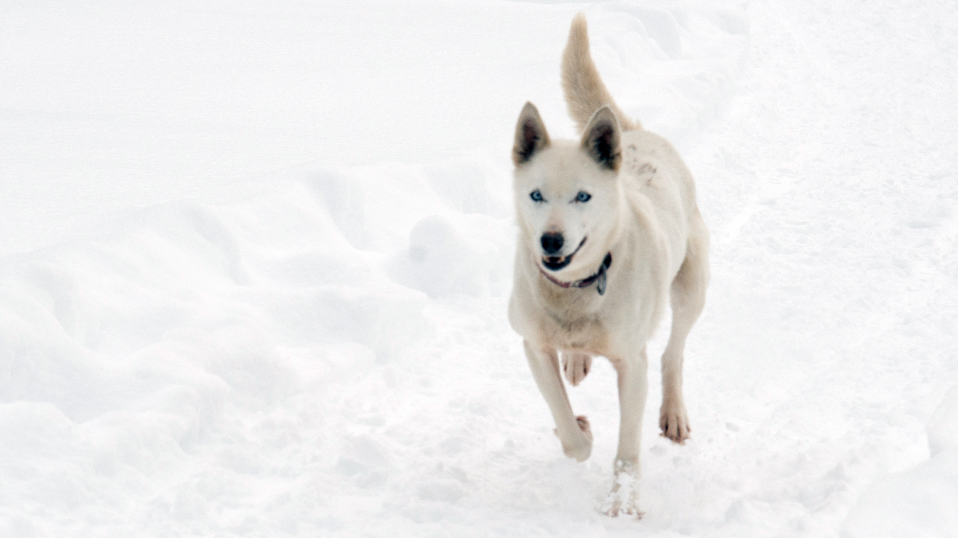 Exclusive Ontario Spca Officers Removed From Dog Sled