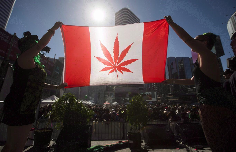 Легализация марихуаны торонто зрелая шишка конопли фото