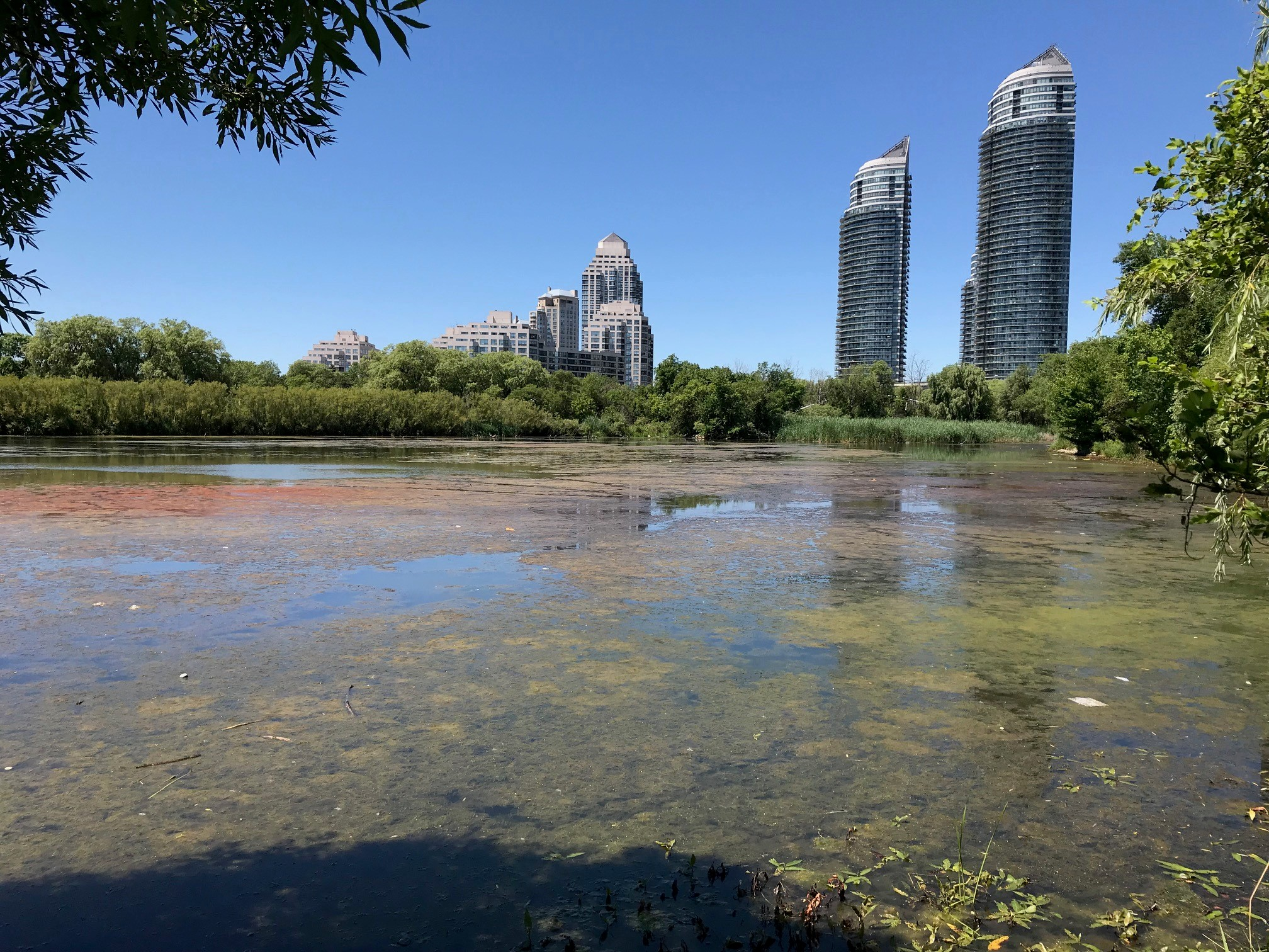 potentially toxic algae found in humber bay east citynews toronto