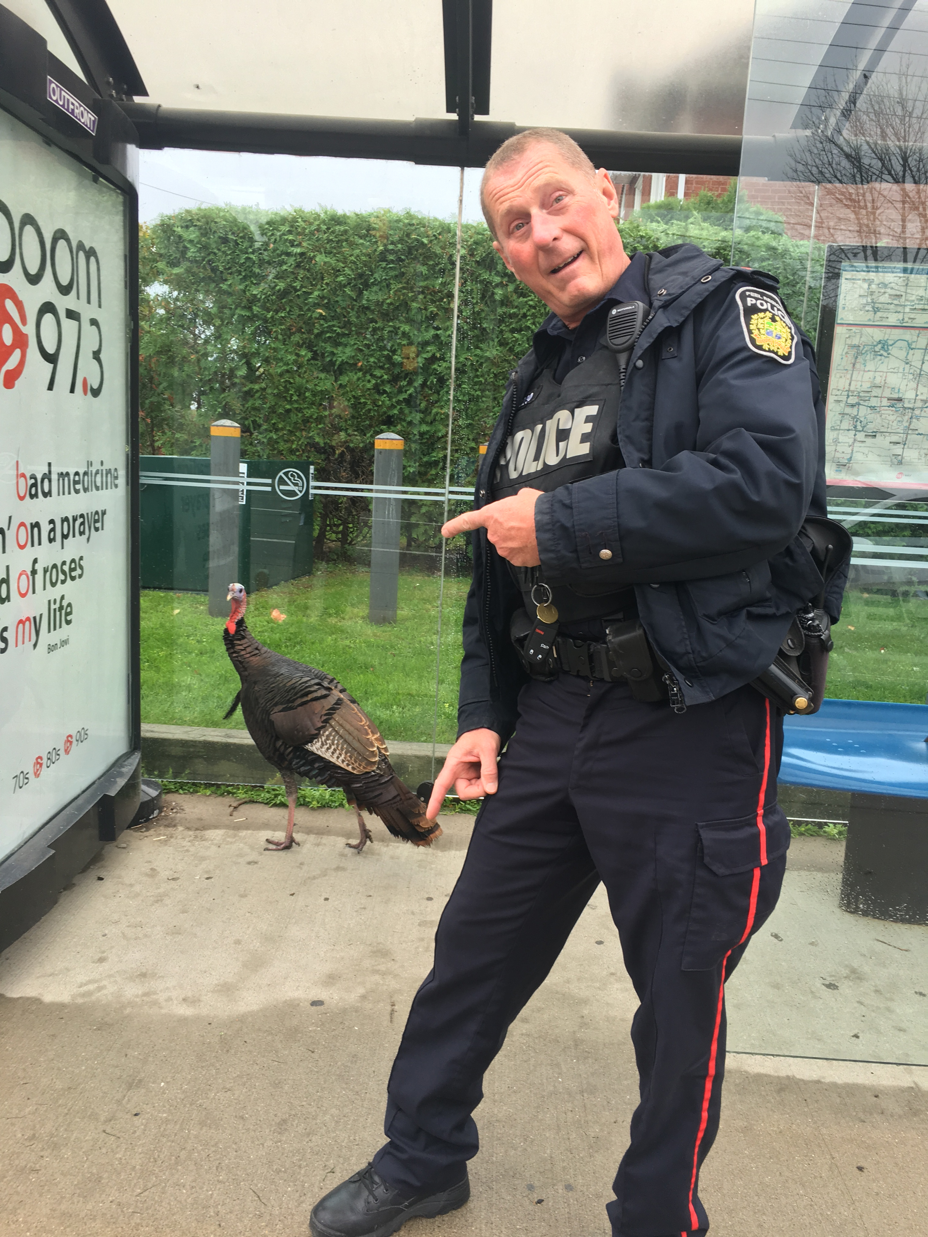 A wild turkey, who is known to police, frequents a bus stop on Lakeshore Road West in Mississauga on Oct. 6, 2018. HANDOUT/Peel Regional Police