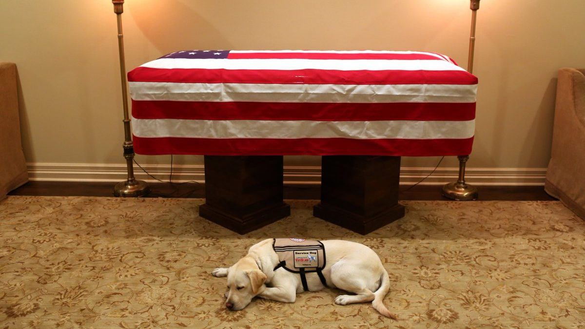 Bush's service dog Dec. 2 2018. Image Credit TWITTER  Jim McGrath