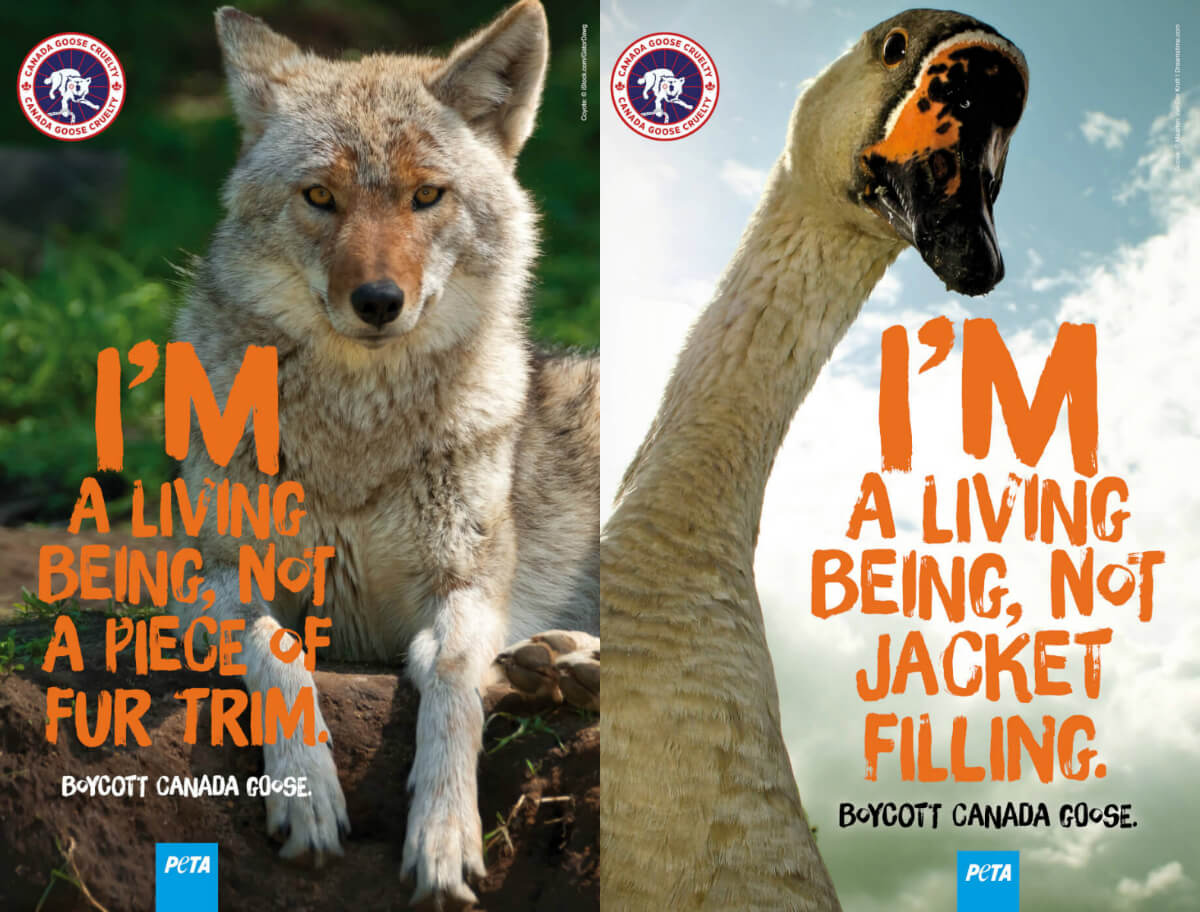 PETA takes Toronto to court over removal of anti-Canada Goose ads
