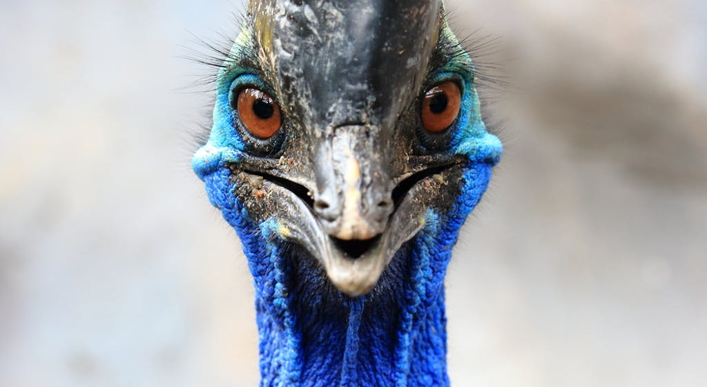 'World's Most Dangerous Bird' Kills Florida Man on His Farm""