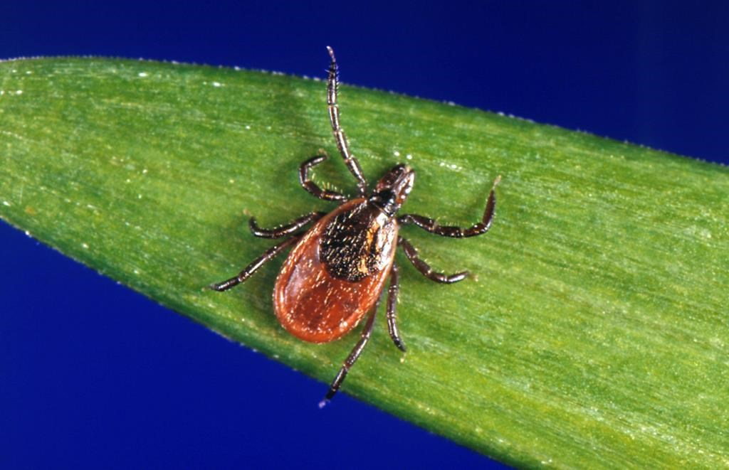 Why you should protect your pooch from ticks all year