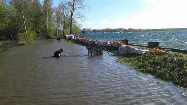 Toronto and feds pledge $30M to rehabilitate city's shorelines, tree canopy