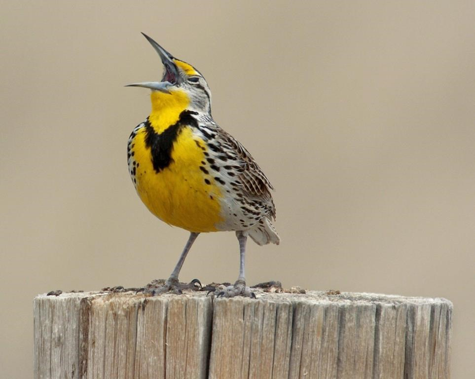 Report finds many birds in decline but co-operation works to rebuild