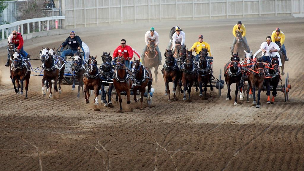 Third Horse Dies At Stampede Chuckwagon Races Driver