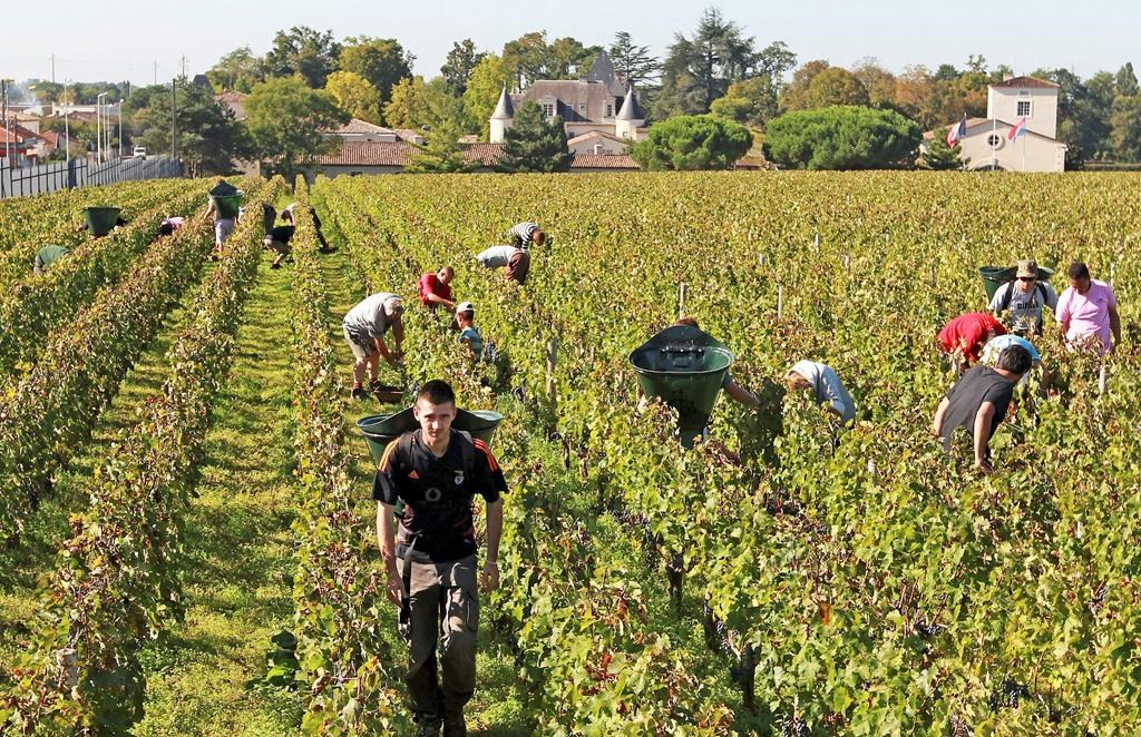 No-spray zones divide French farmers from anxious neighbours
