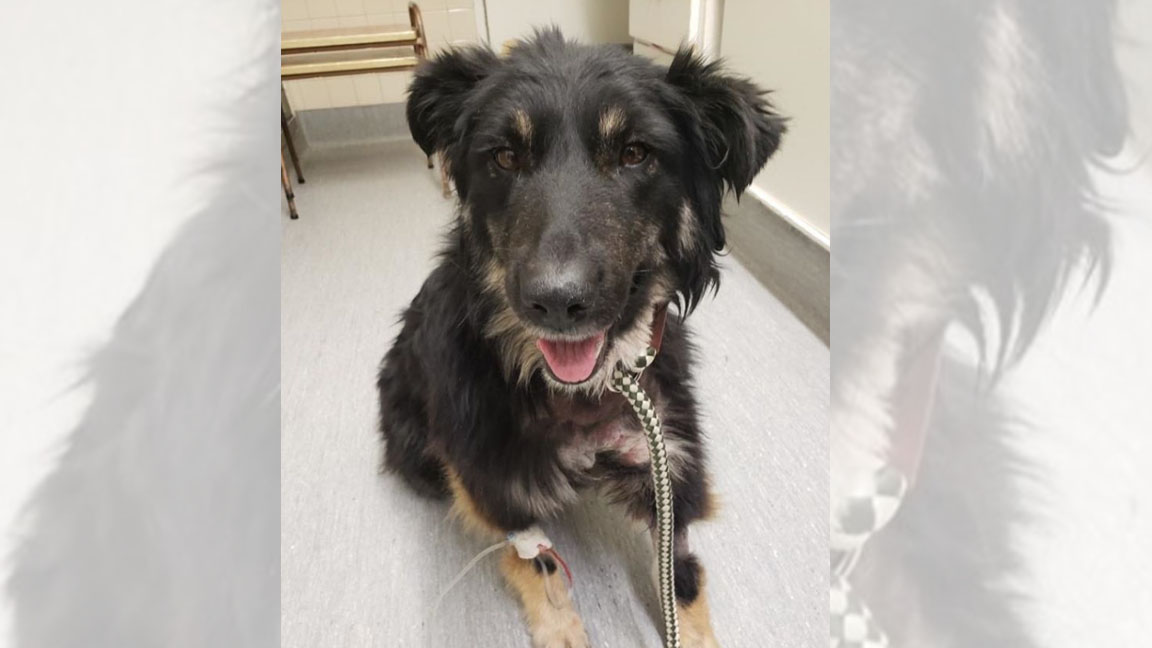 Manitoba animal rescue group caring for dog found with jar stuck on head