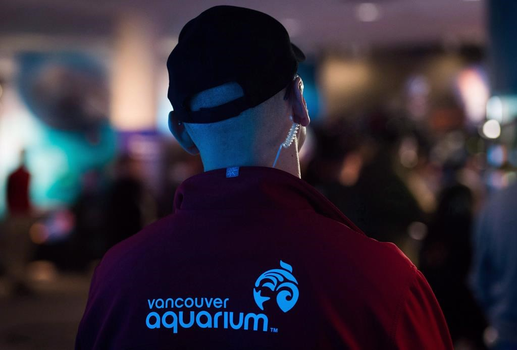Vancouver Aquarium Closes Programming Amid Financially Challenging Time Citynews Toronto